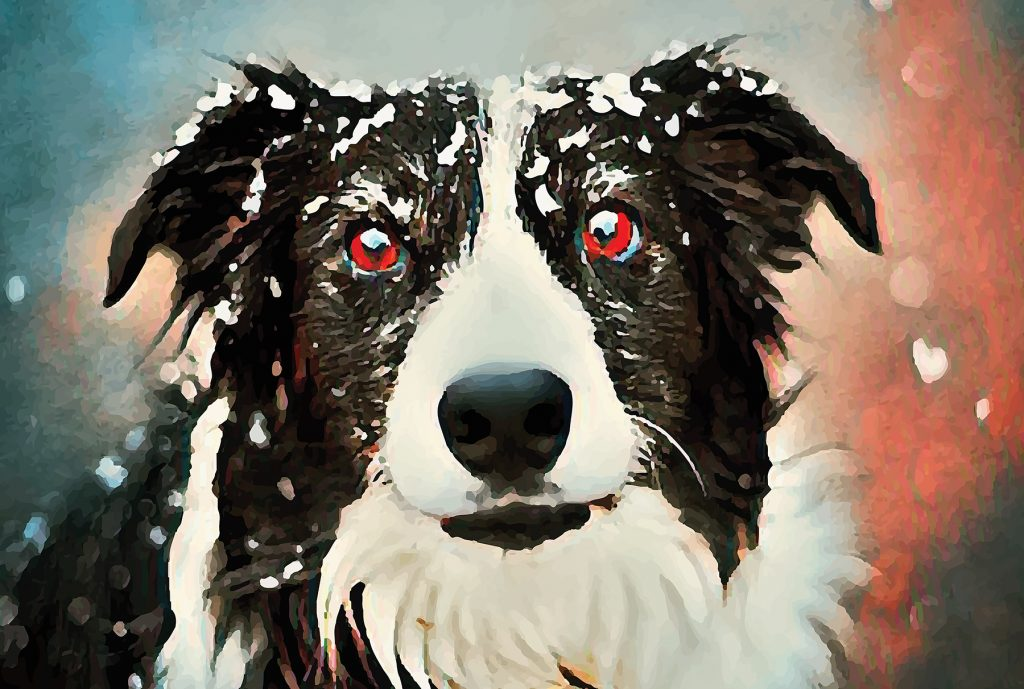 Image of a border collie with snow falling on its head and a background of blue and coral.
