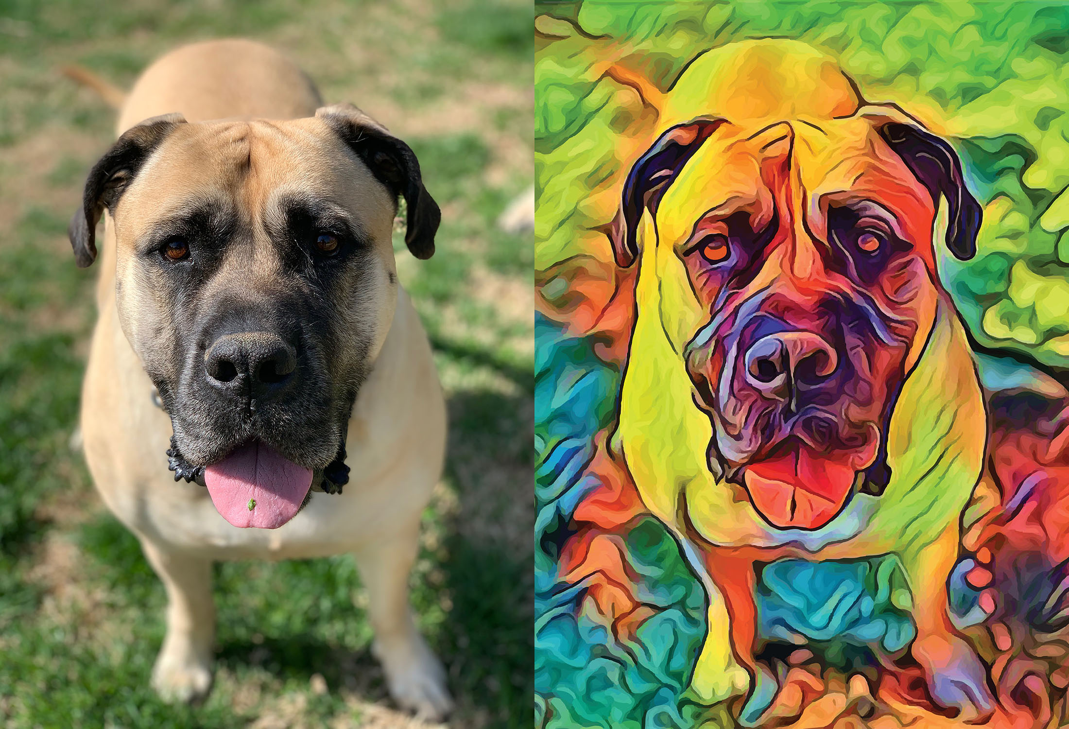 Before and after stylized image of a panting dog