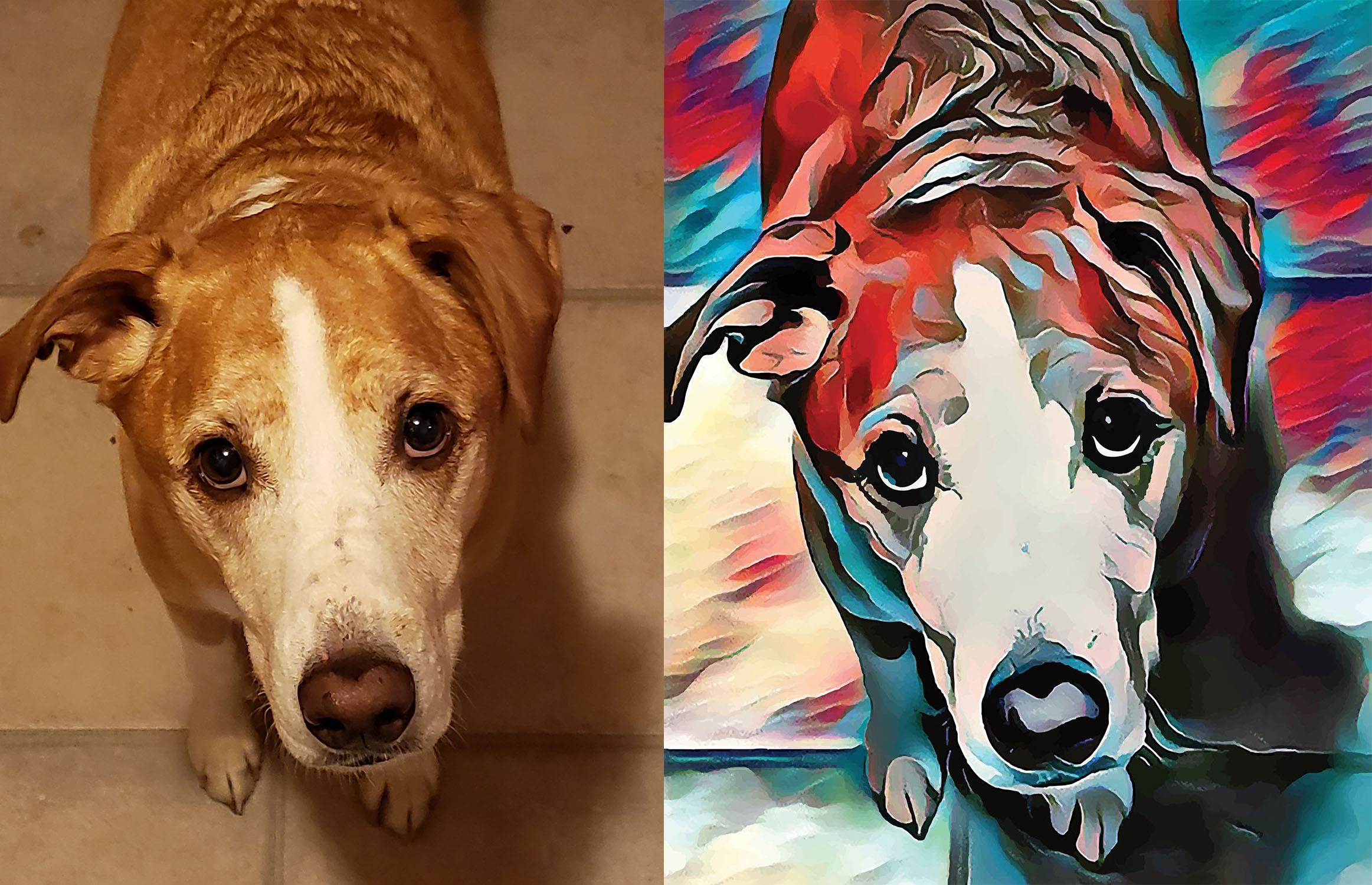 Before and after stylized image of a dog's face