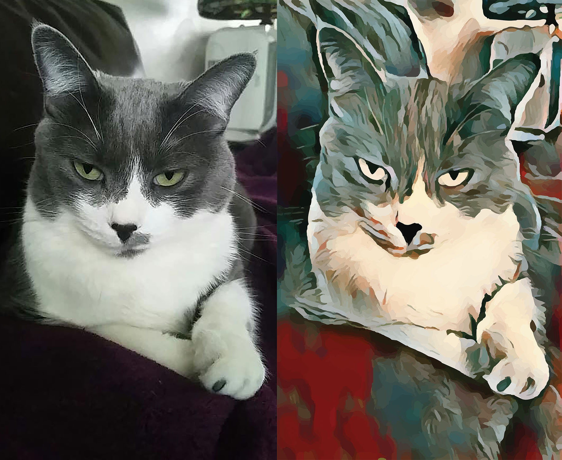 Before and after stylized image of cat's face