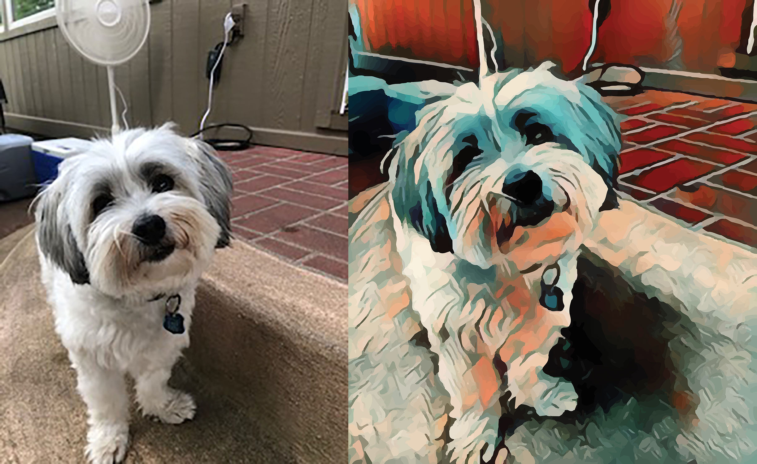 Before and after stylized image of a dog cocking its head