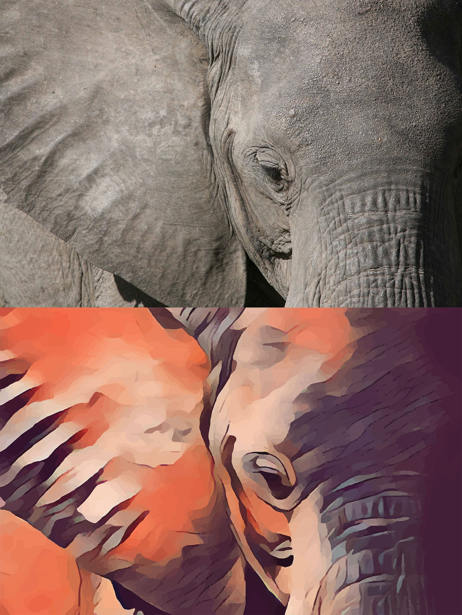 Before and after stylized image of an elephant's ear