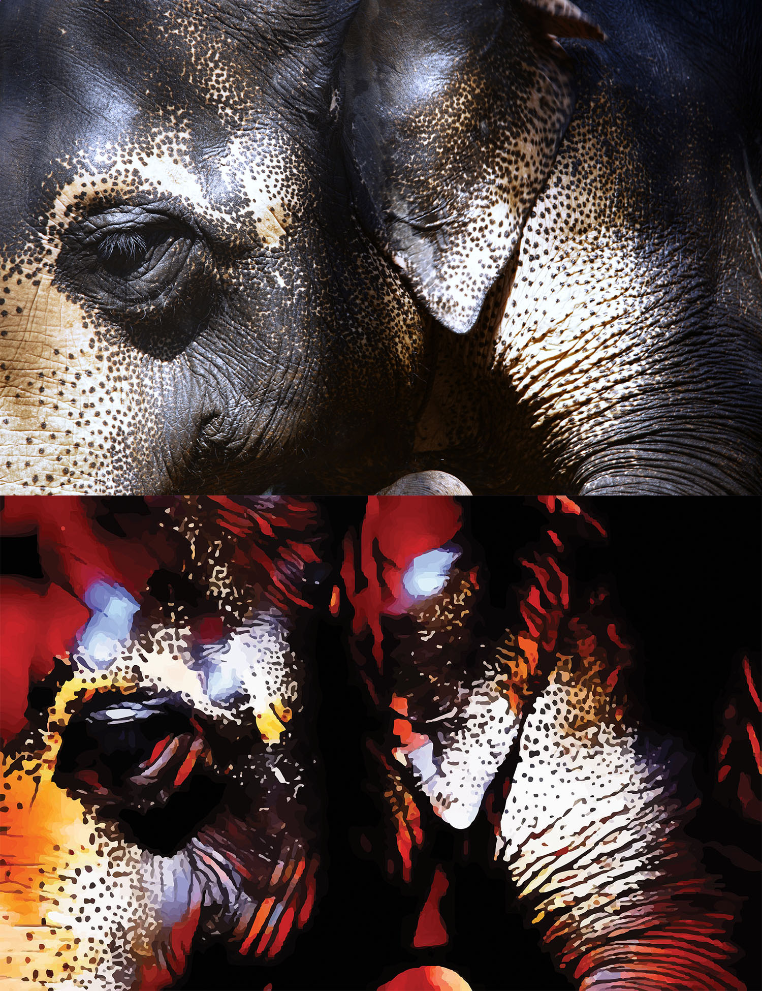 Before and after stylized image of an elephant's eye