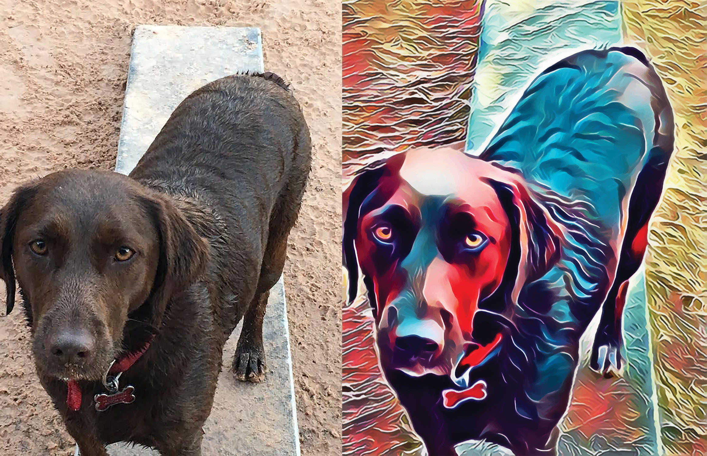 Before and after stylized image of a dog standing on a board