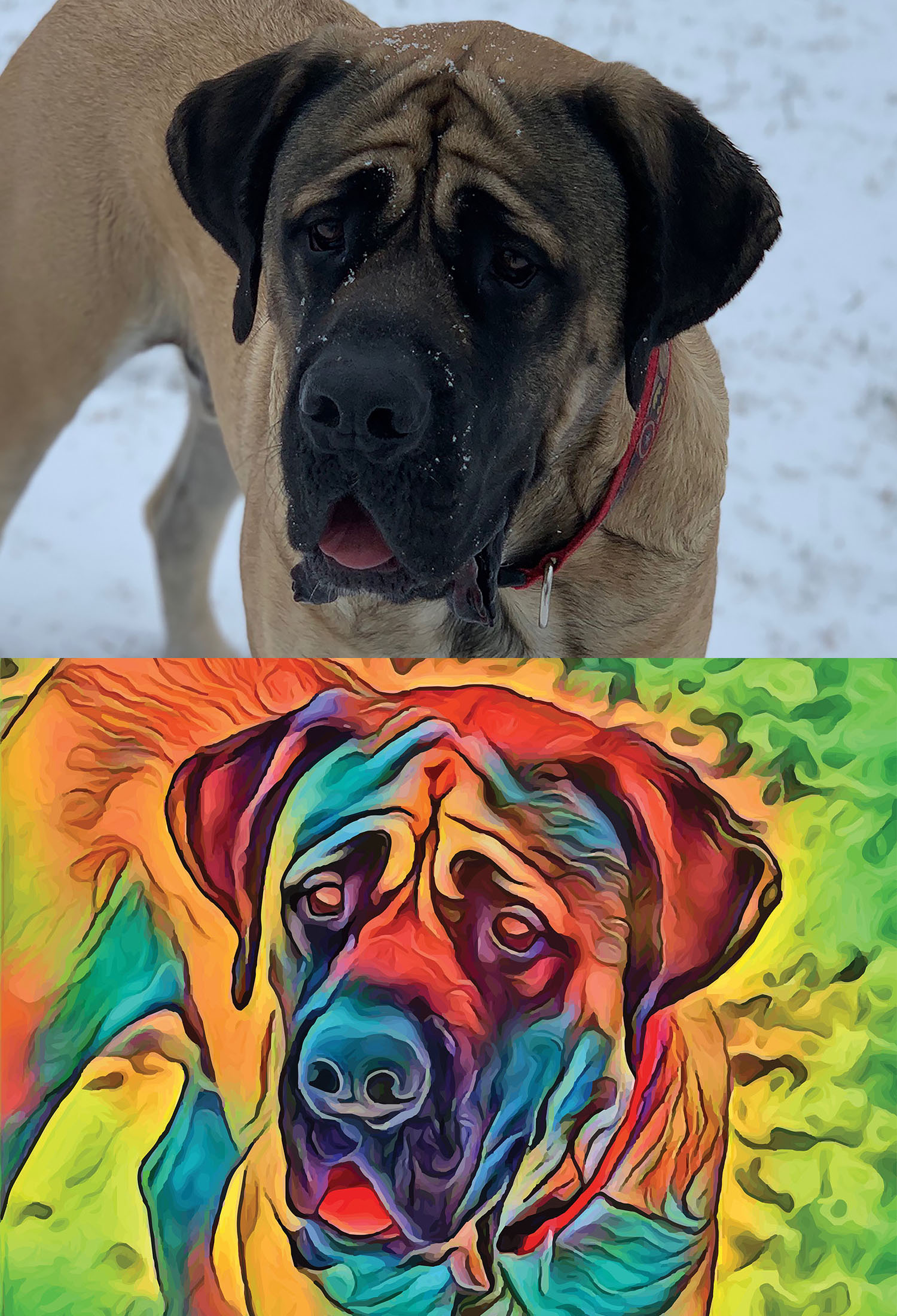 Before and after stylized image of a mastiff