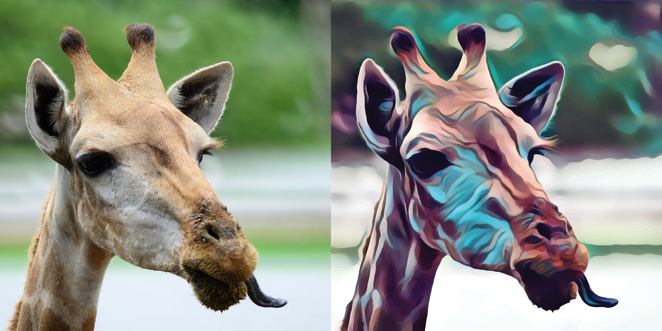 Before and after stylized image of a giraffe sticking its tongue out