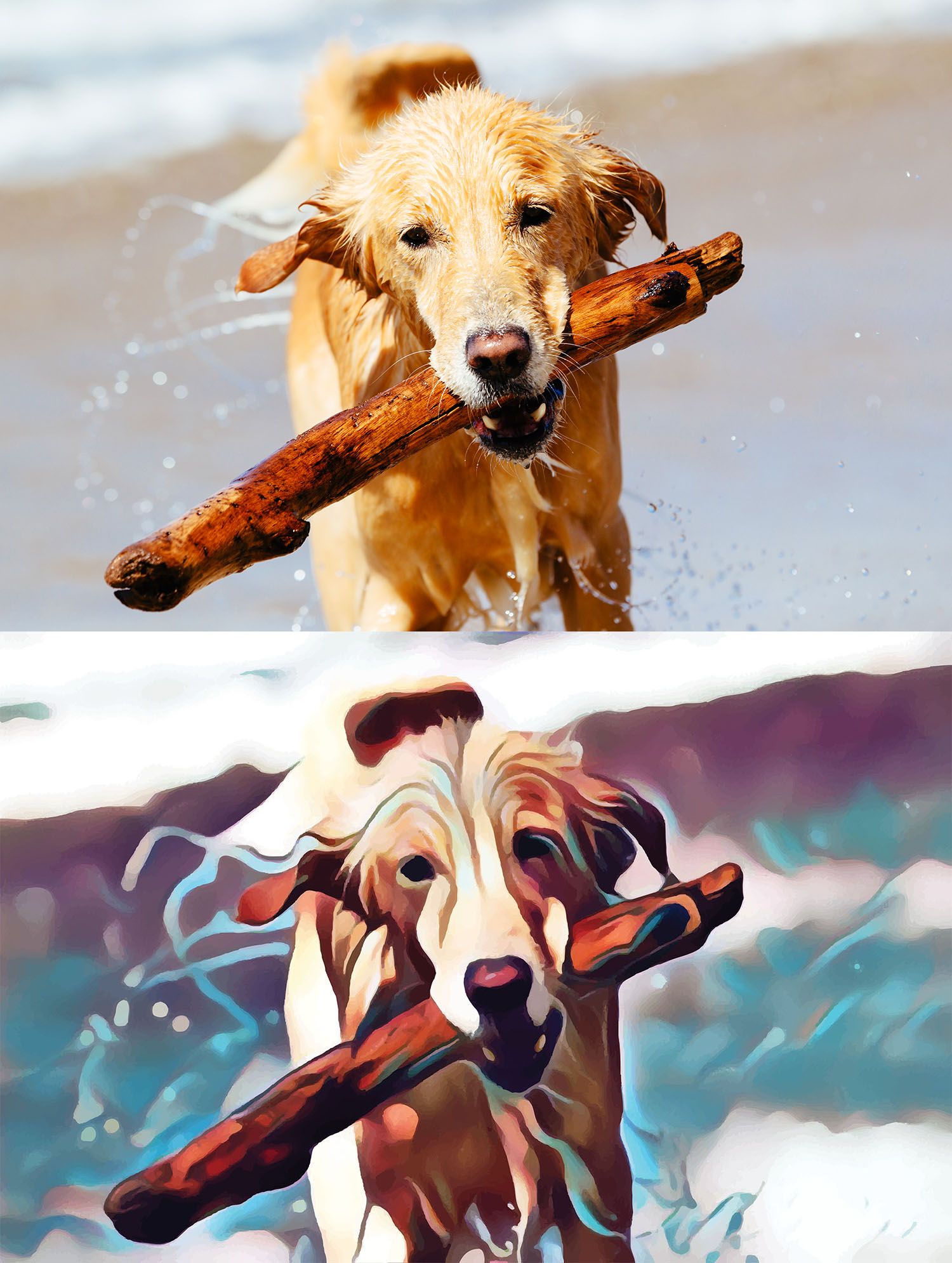 Before and after stylized image of a dog on the beach with a big stick in its mouth