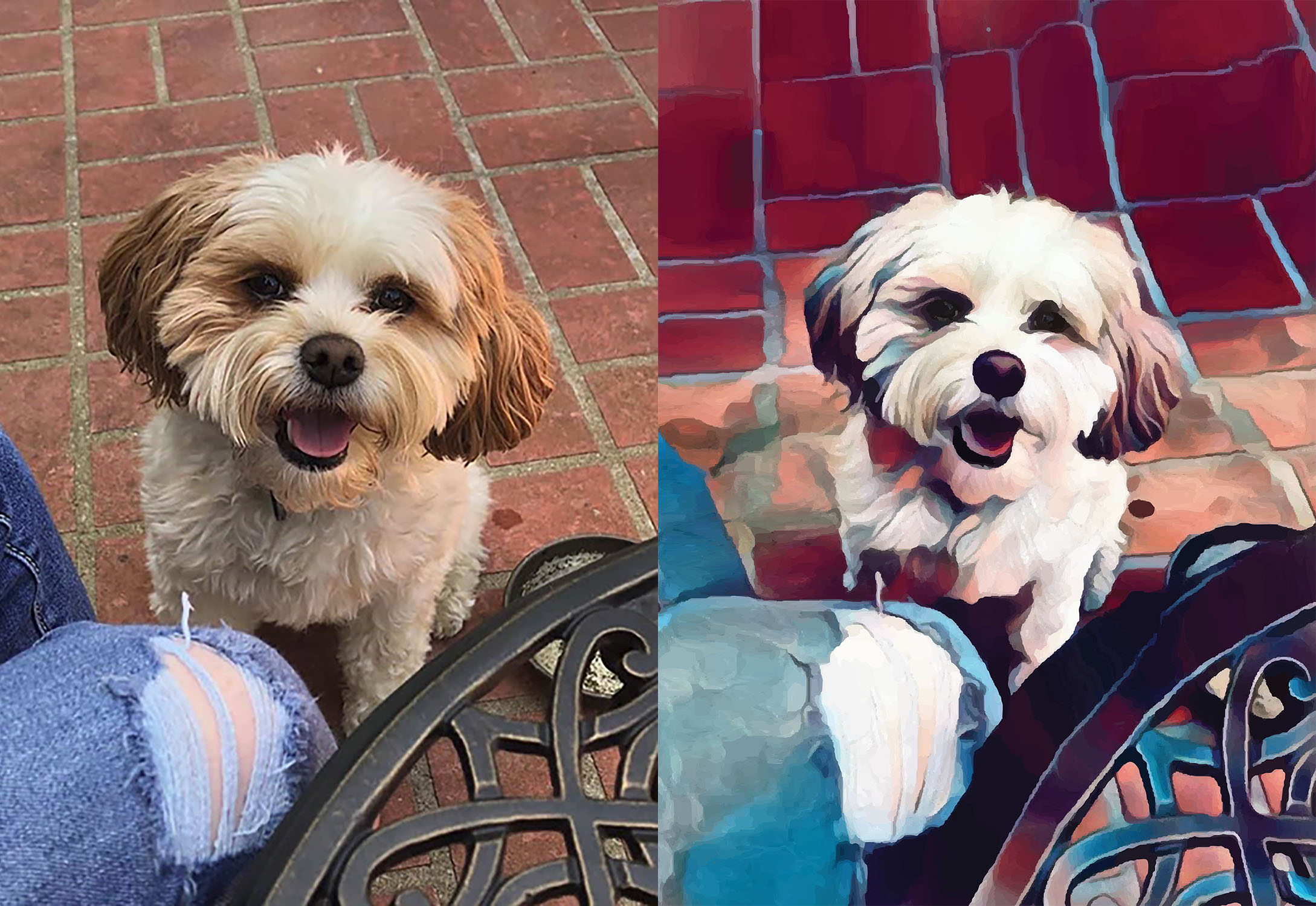 Before and after stylized image of a dog standing next to a wrought iron table