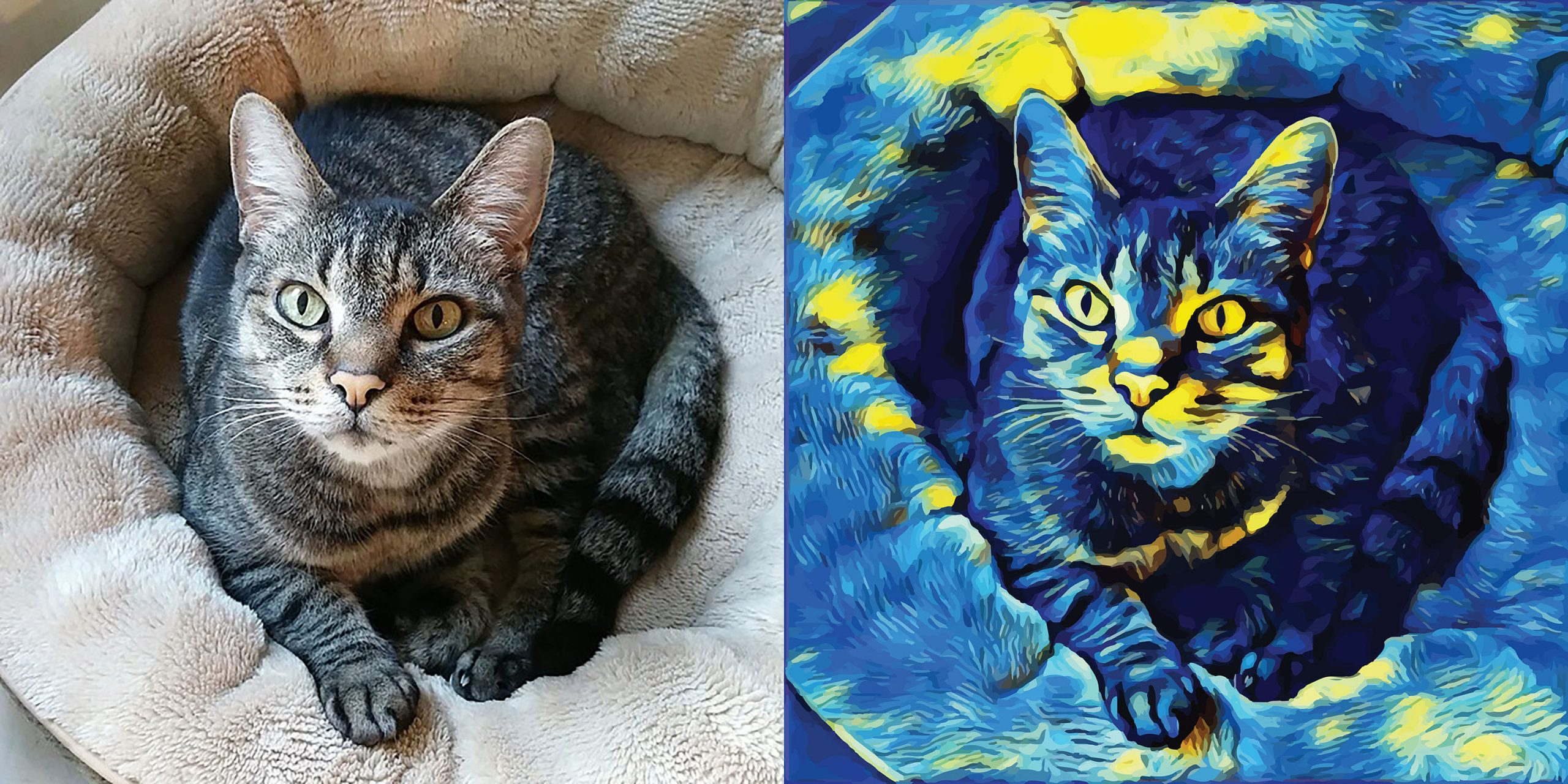 Before and after stylized image of a cat lying in its bed