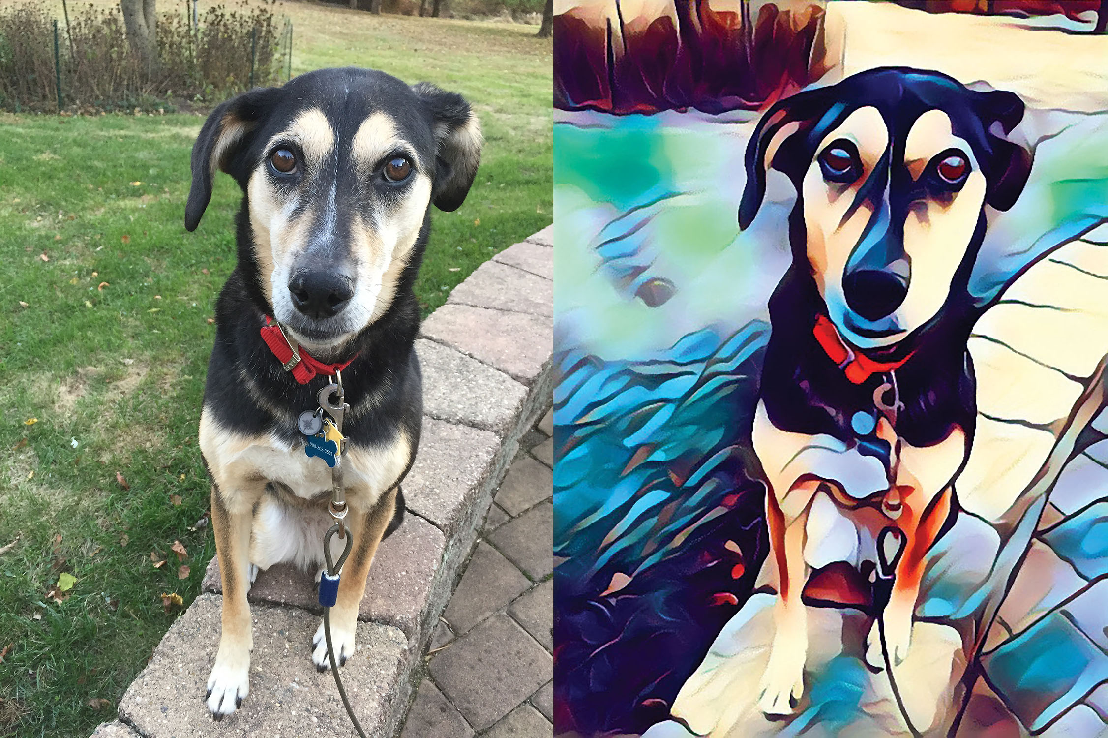 Before and after stylized image of a dog standing on a patio wall