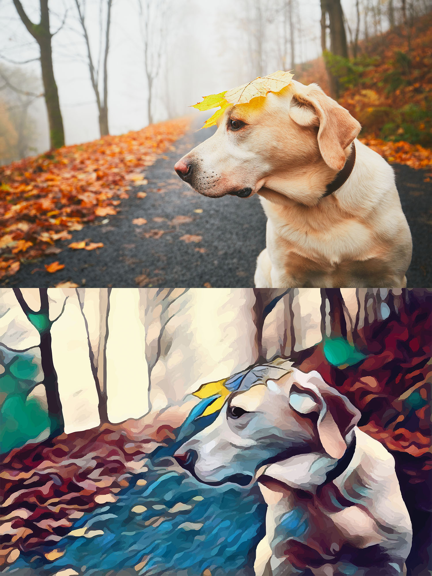 Before and after stylized image of a dog in the woods with a leaf on its head