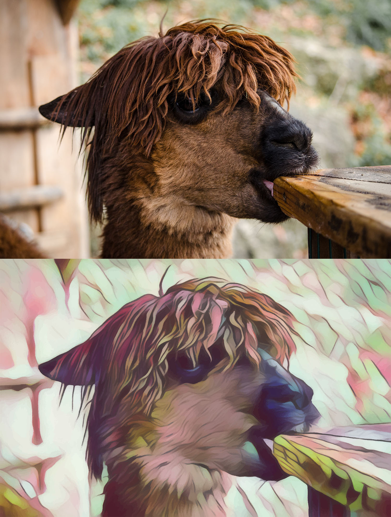 Before and after stylized image of a llama chewing on a table