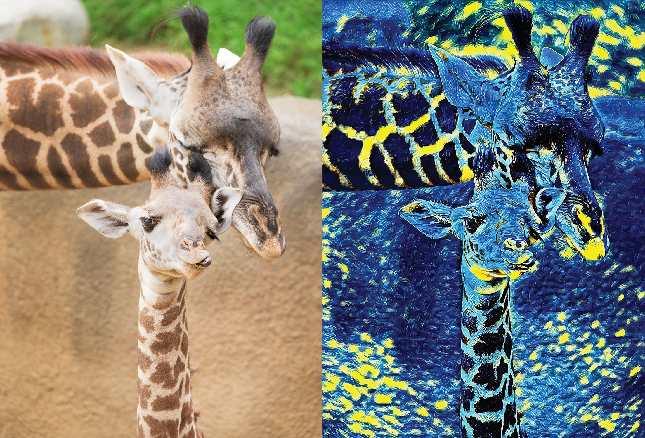 Before and after stylized image of a mama and baby giraffe