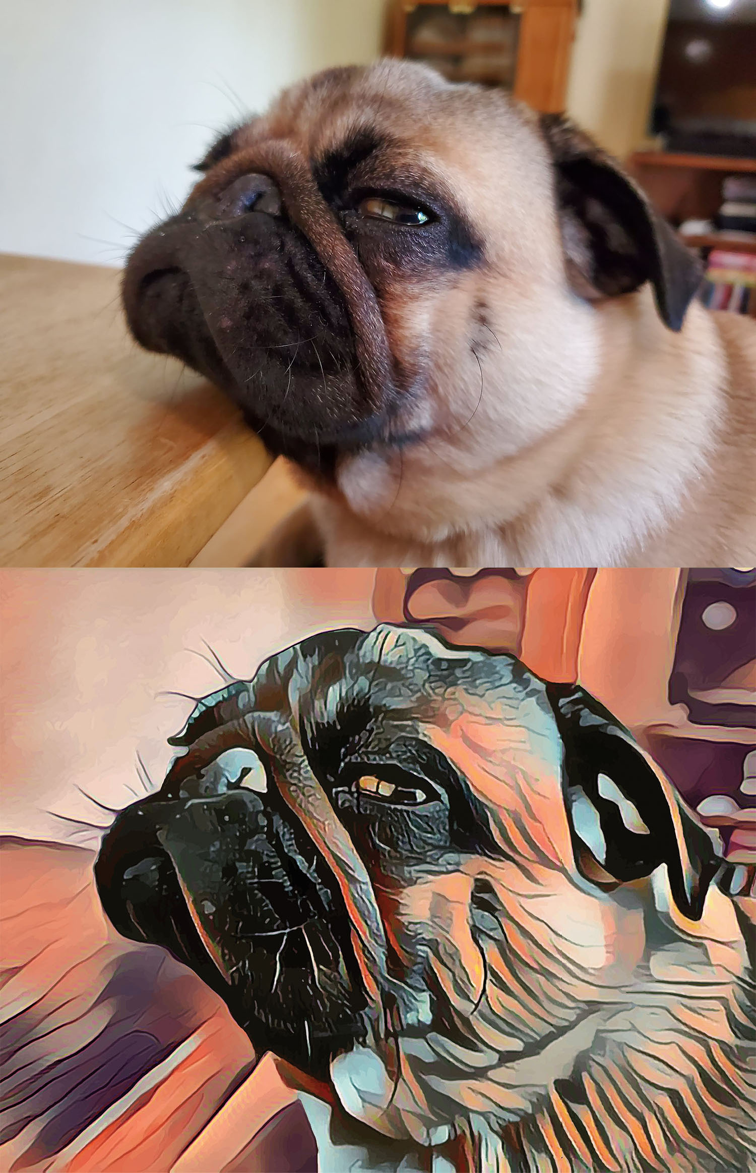 Before and after stylized image of a pug's face