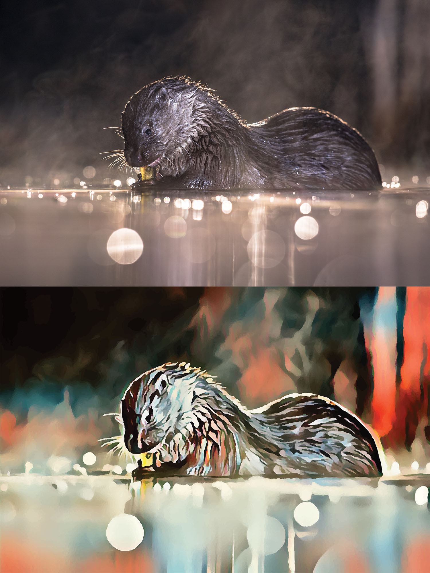 Before and after stylized image of an otter in the water chewing on something