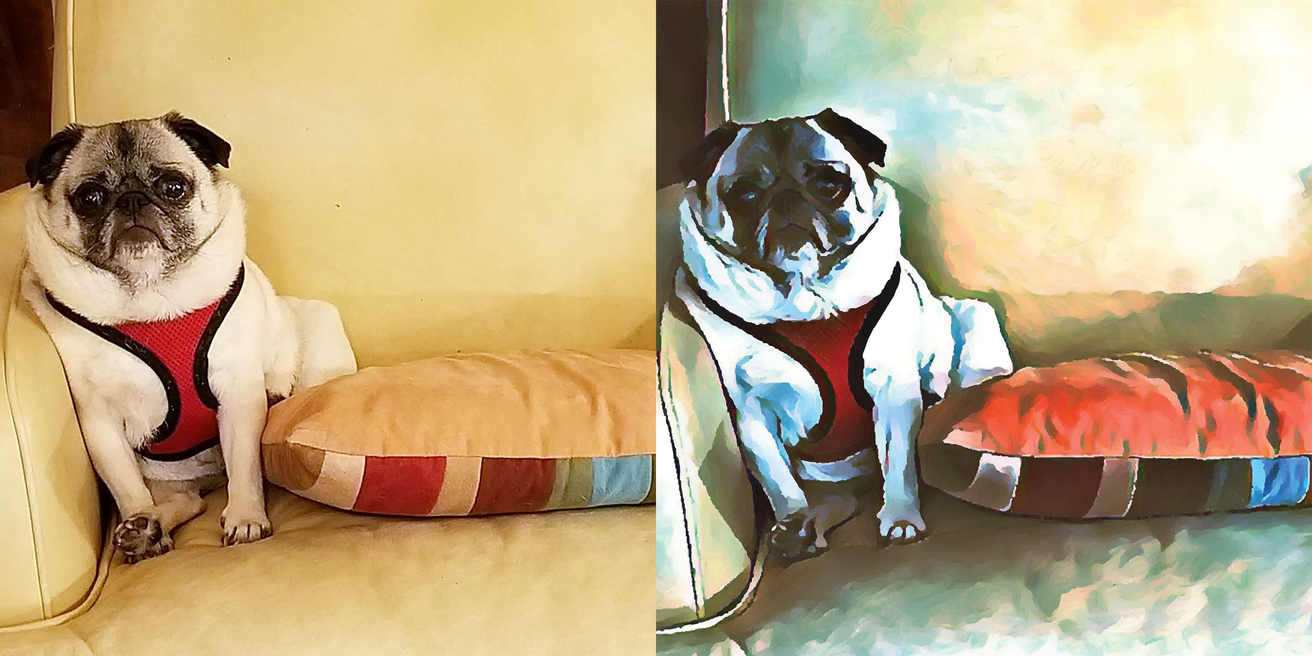 Before and after stylized image of a pug sitting on a couch