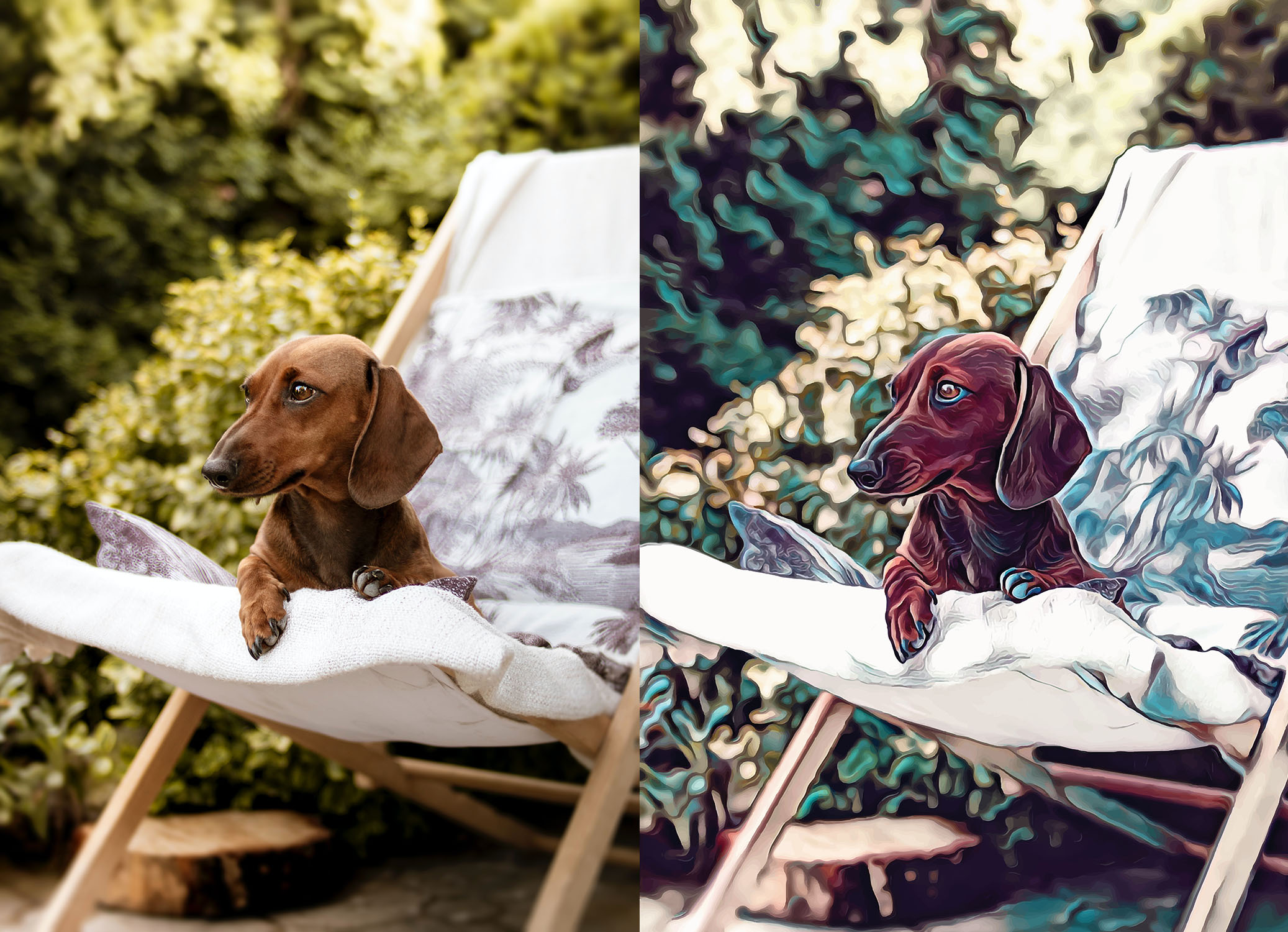Before and after stylized image of a dachshund lying on a patio chair