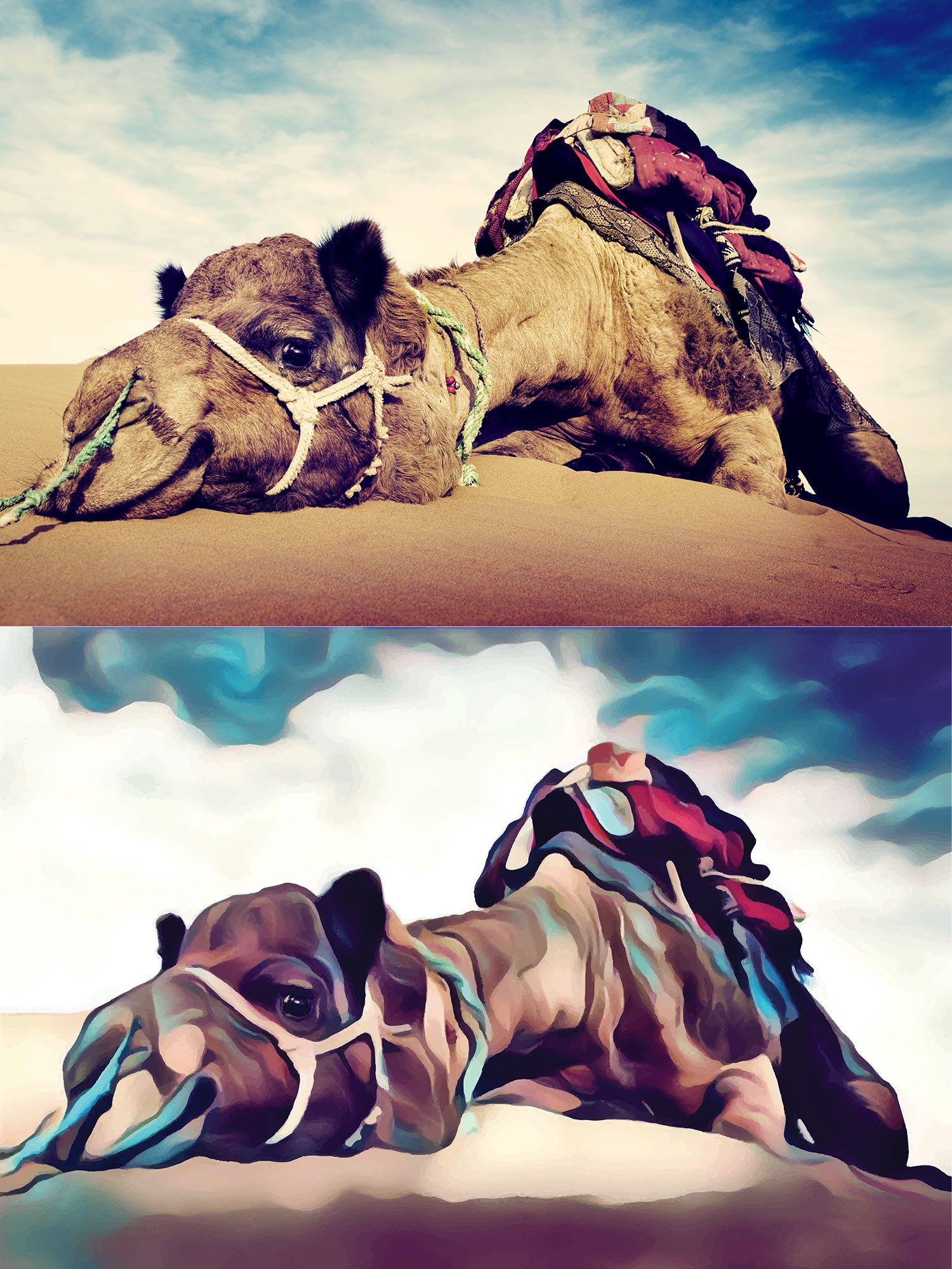 Before and after stylized image of a camel prostrate on the desert floor.