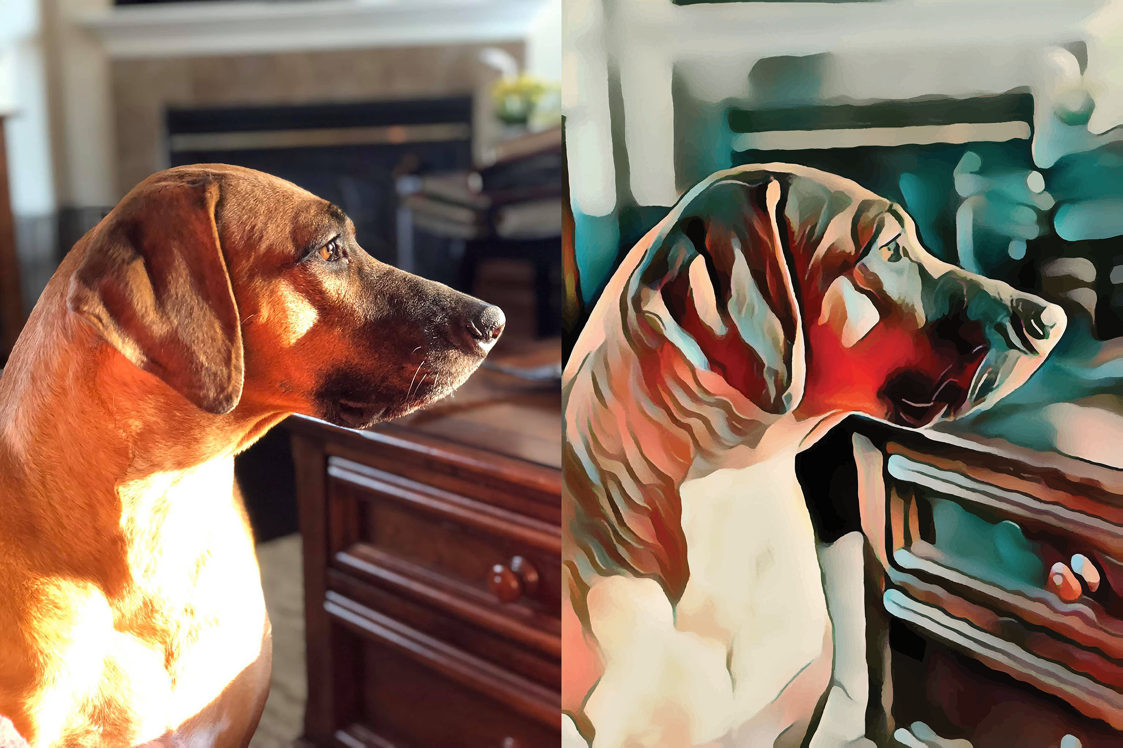 Before and after stylized image of a brown dog in profile
