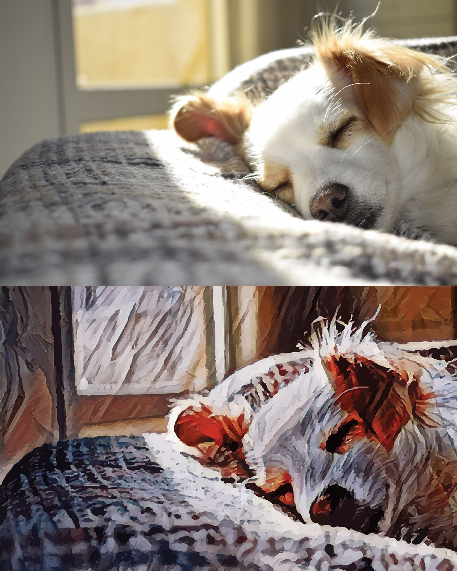 Before and after stylized image of a dog sleeping on a bed in the sun streaming in from a window
