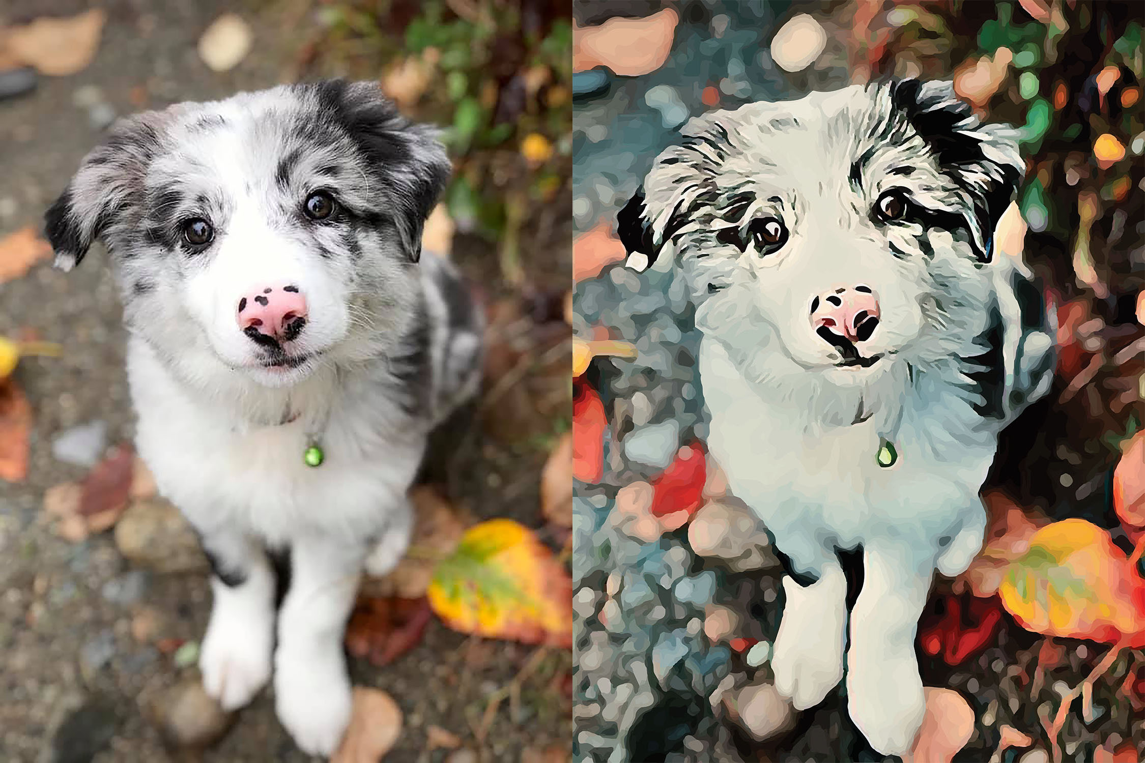 Before and after stylized image of a puppy sitting and looking into the camera