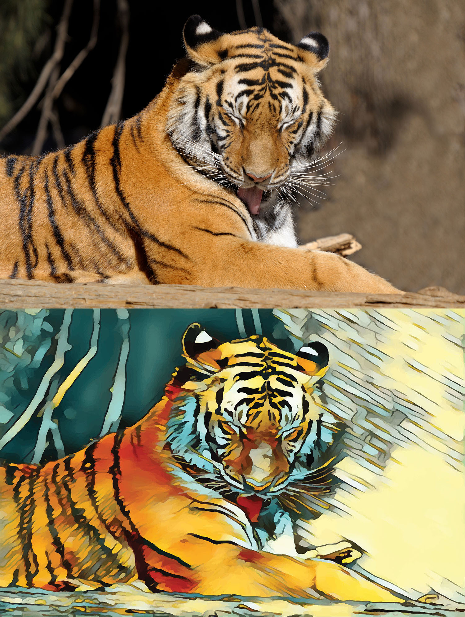 Before and after stylized image of a tiger licking its fur