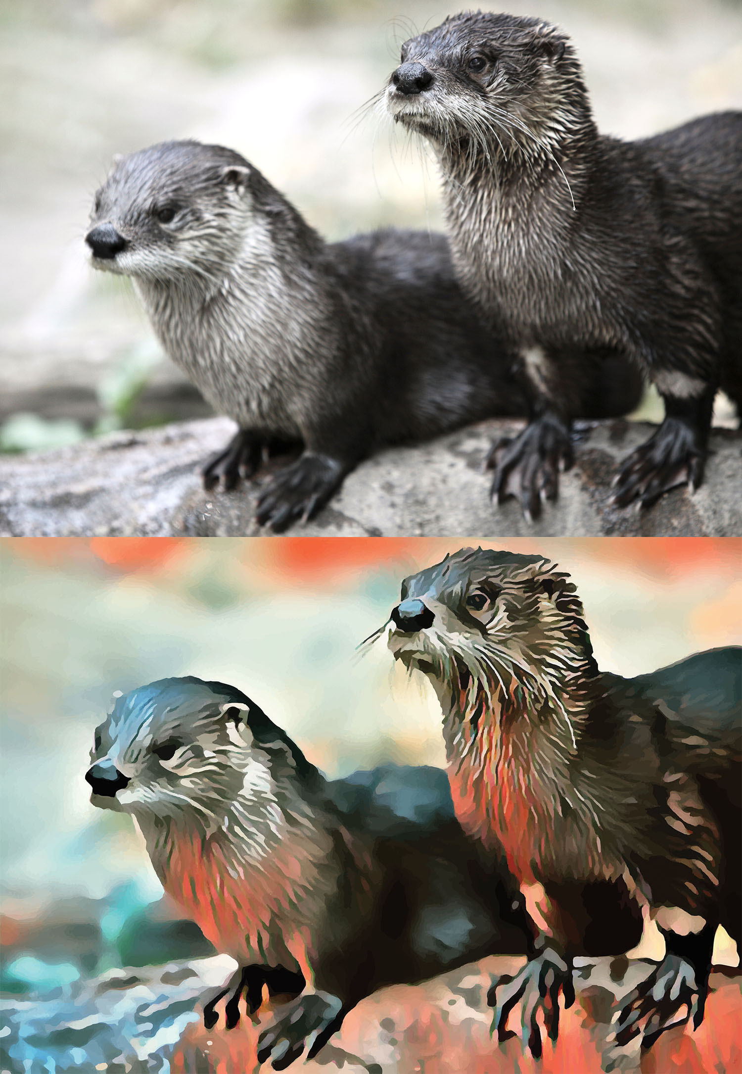 Before and after stylized image of two wet otters standing on a rock