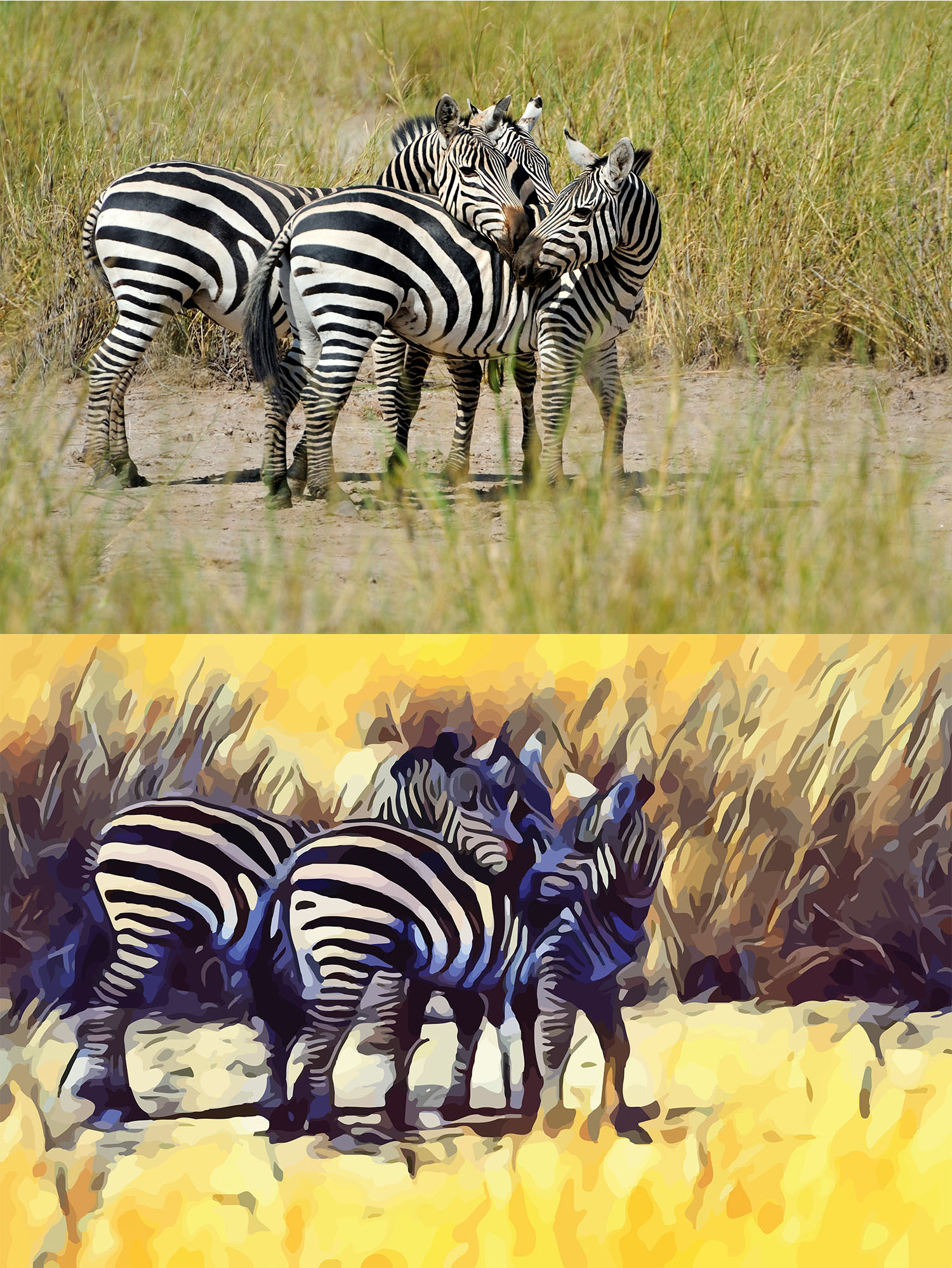 Before and after stylized image of three zebras standing together touching noses