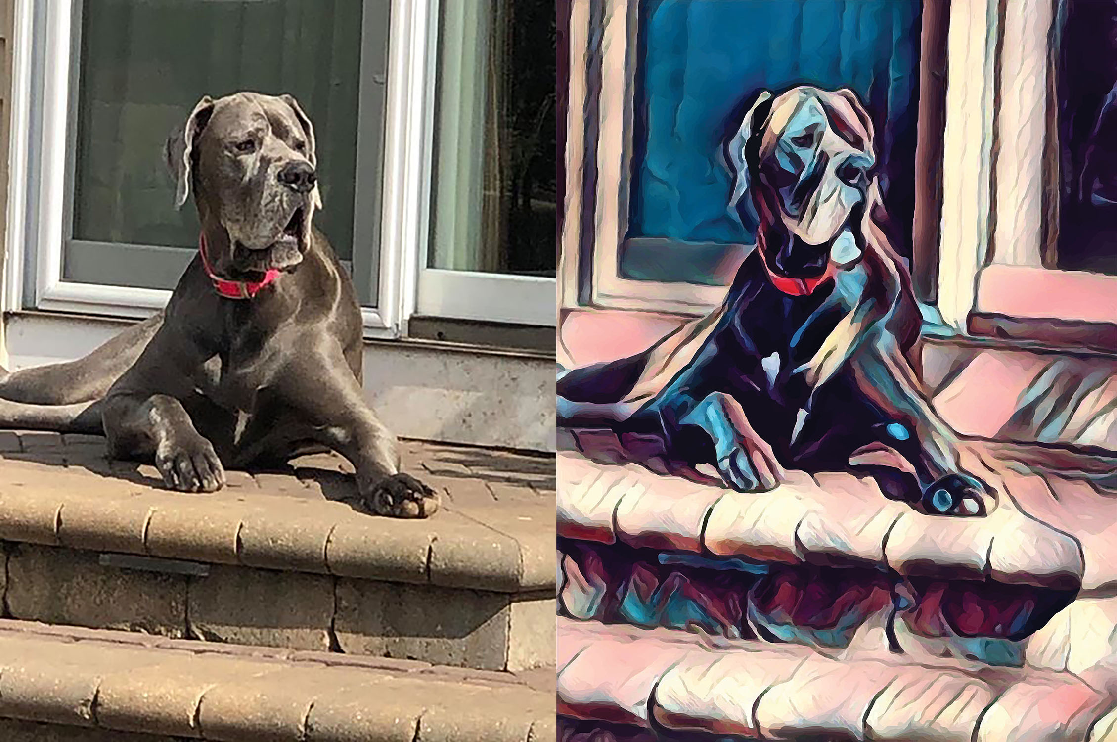 Before and after stylized image of a big dog lying on a patio