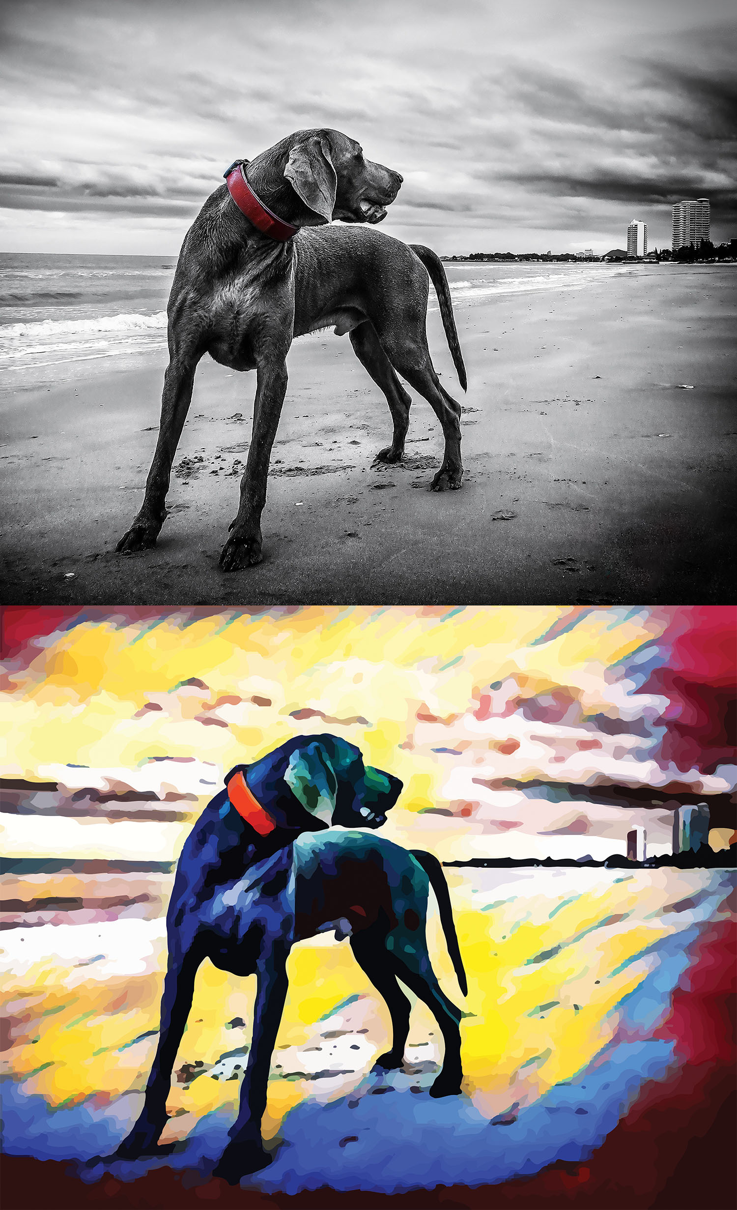 Before and after stylized image of a big dog standing on a beach looking back over its shoulder