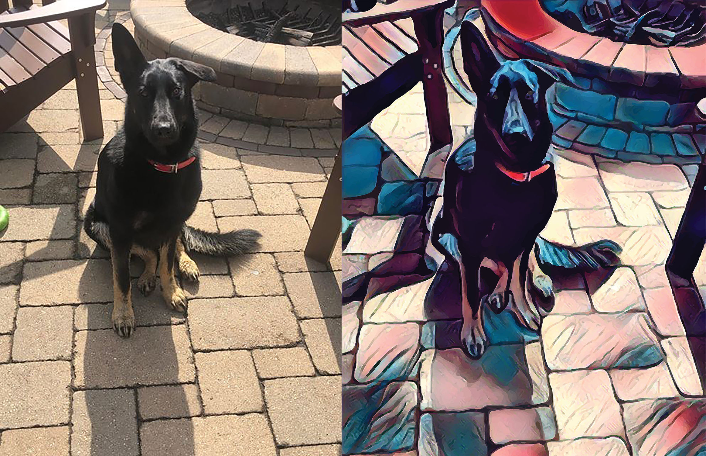 Before and after stylized image of a German shepherd sitting on a patio