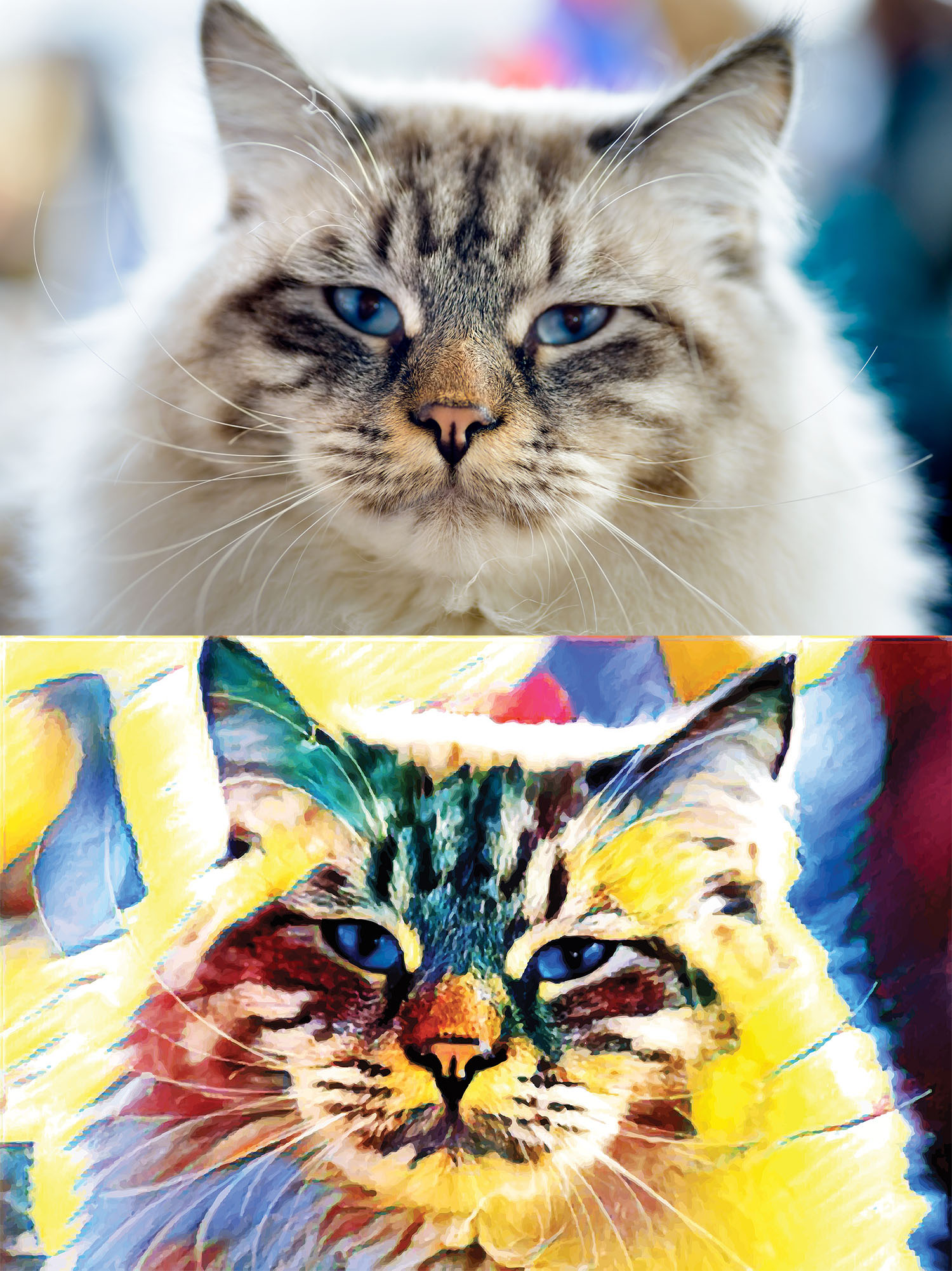 Before and after stylized image of a cat's face