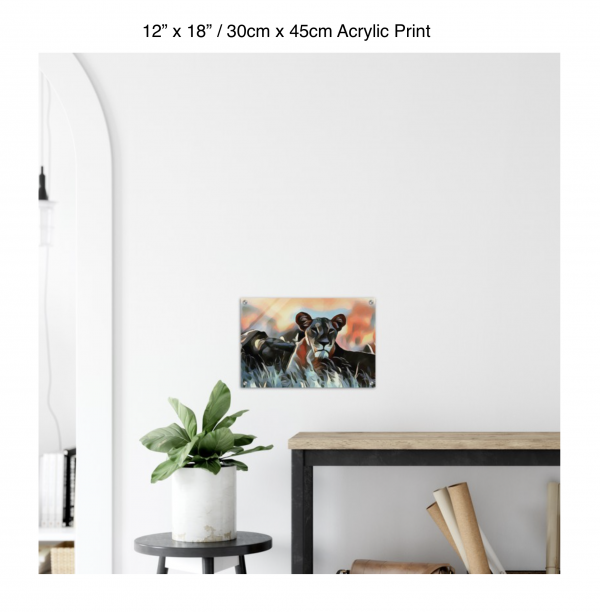 18 inch by 12 inch acrylic print of a lioness hanging over a shelf next to a small table with a plant