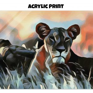 Acrylic print of a Lioness lying in the grass in tones of orange, blue, and gold