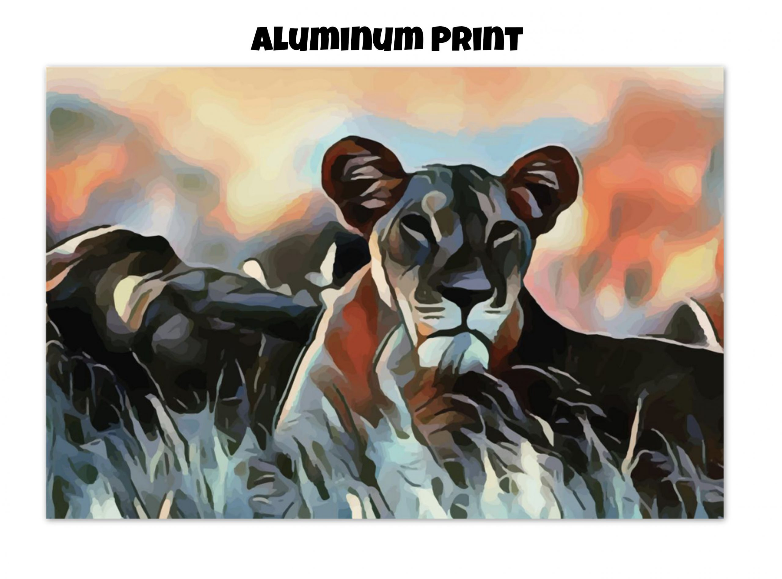 Aluminum print of a Lioness lying in the grass in tones of orange, blue, and gold