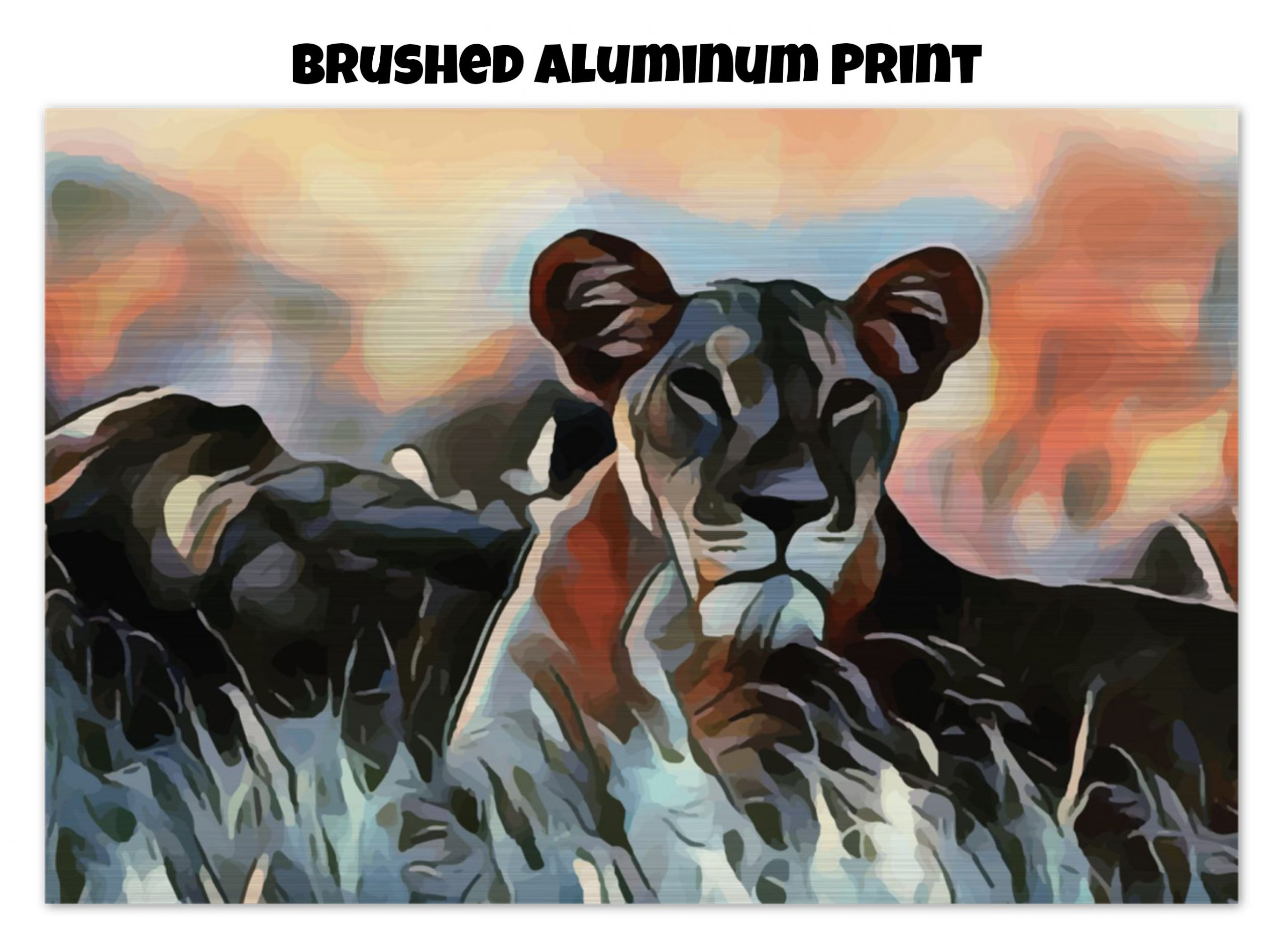 Brushed aluminum print of a Lioness lying in the grass in tones of orange, blue, and gold