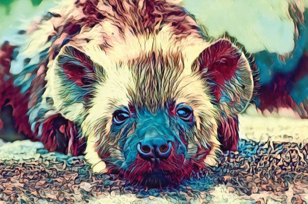 Stylized image of a baby hyena with its head on its paws done in yellow, red, and blue