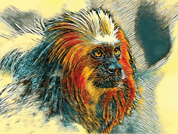 Stylized image of a lion tamarin done in soft yellow, orange, and gold.
