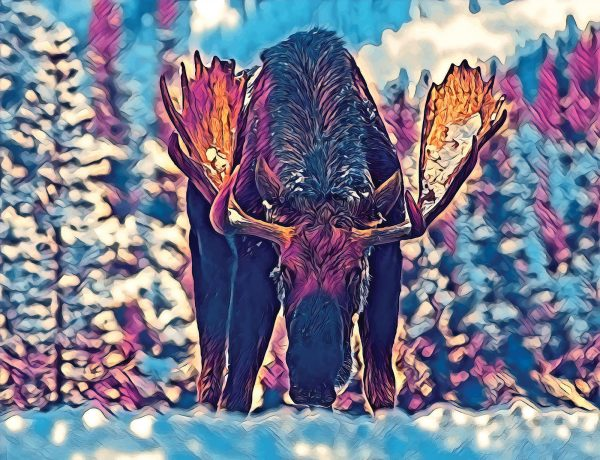Stylized image of a moose in snow done in purples and blues