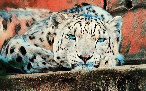 Stylized image of a snow leopard resting on a stone wall done in red, blue, and grey